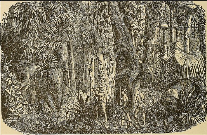 The Death Curse of the Great Hunter. Hunting elephants.