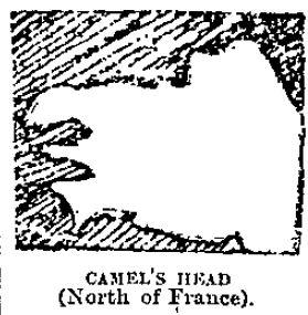 camel head map face