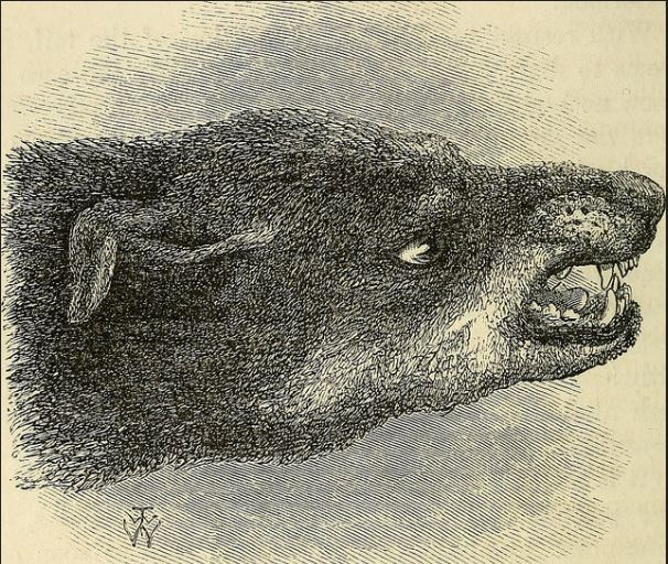 Creature Feature: Something Between a Dog and a Calf snarling dog