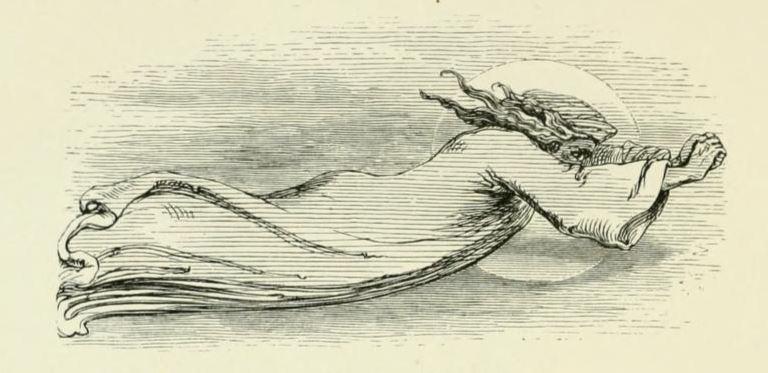the banshee Midsummer Eve 1870 p. 131