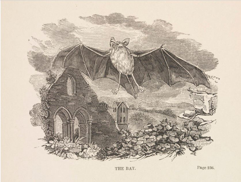 The Burbank Bat Light Bat flies over ruined church.