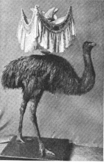 An Emu Lamp