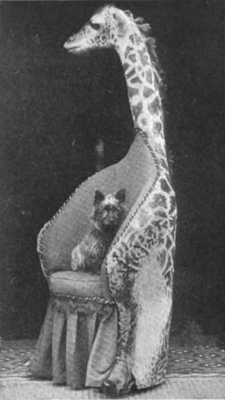 Chair Made from a Baby Giraffe