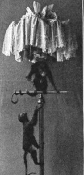 Pet monkeys mounted on a floor lamp.