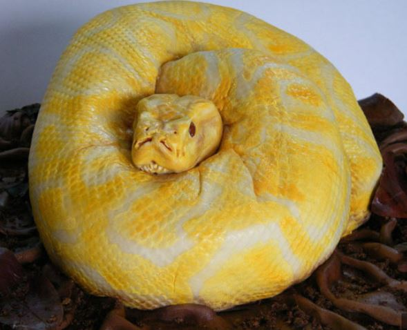 Superfluous Snakes. A Burmese Python cake by Francesca Pitcher of North Star Cakes http://laughingsquid.com/a-birthday-cake-that-looks-just-like-an-amelanistic-burmese-python/