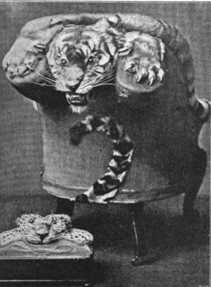 Man-Eating Tiger, Mounted on an Arm-chair