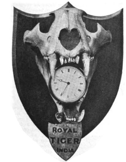 Record Tiger Skull, Holding Clock, in Hall of Country House